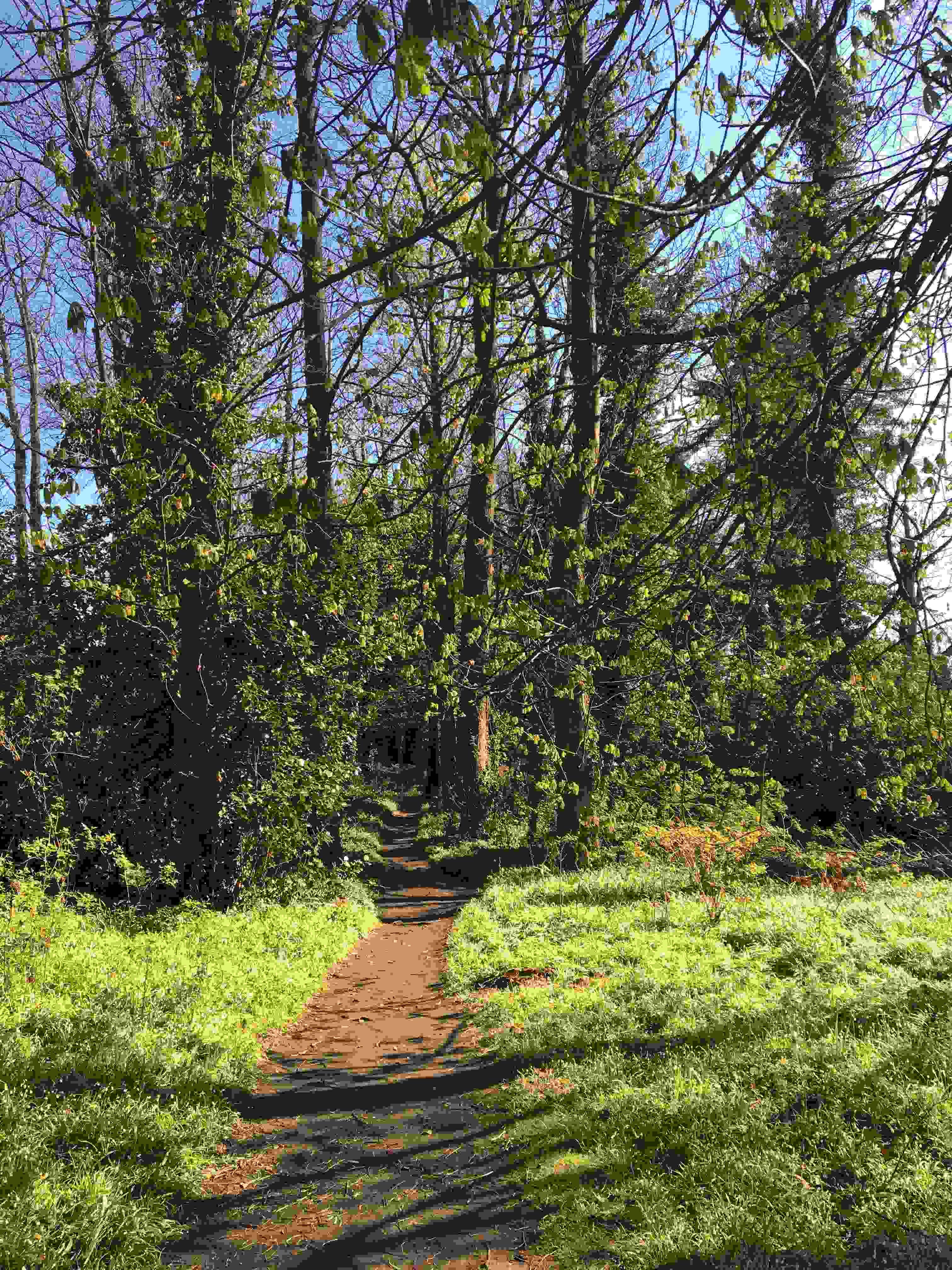 Walk Away Your Worries With Woodland Walks