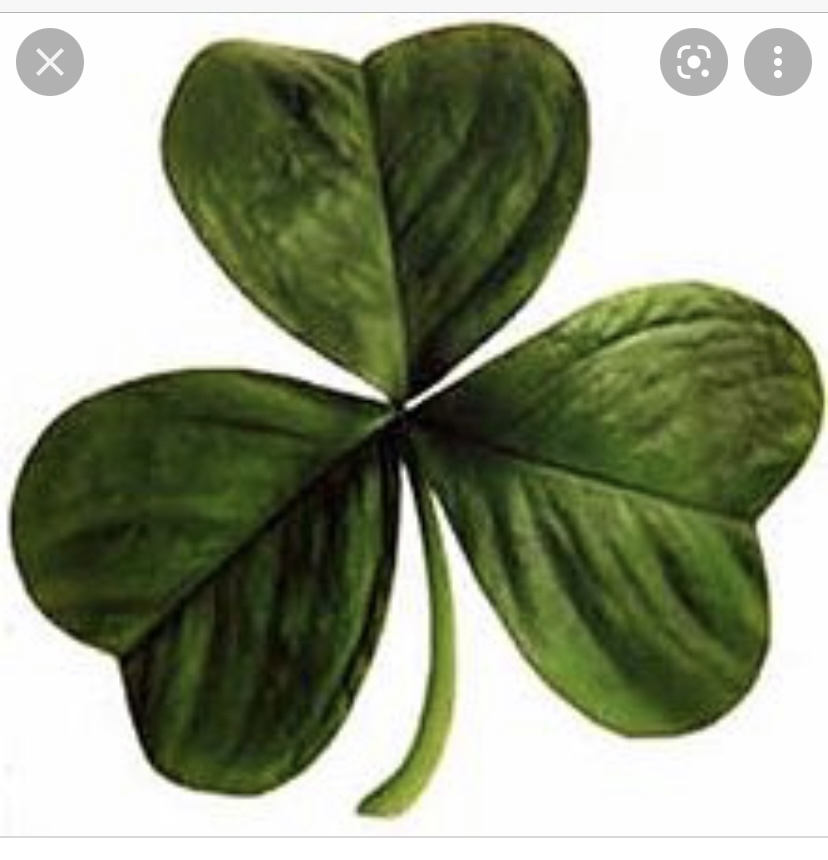 The Shamrock Is Back Baby!!!